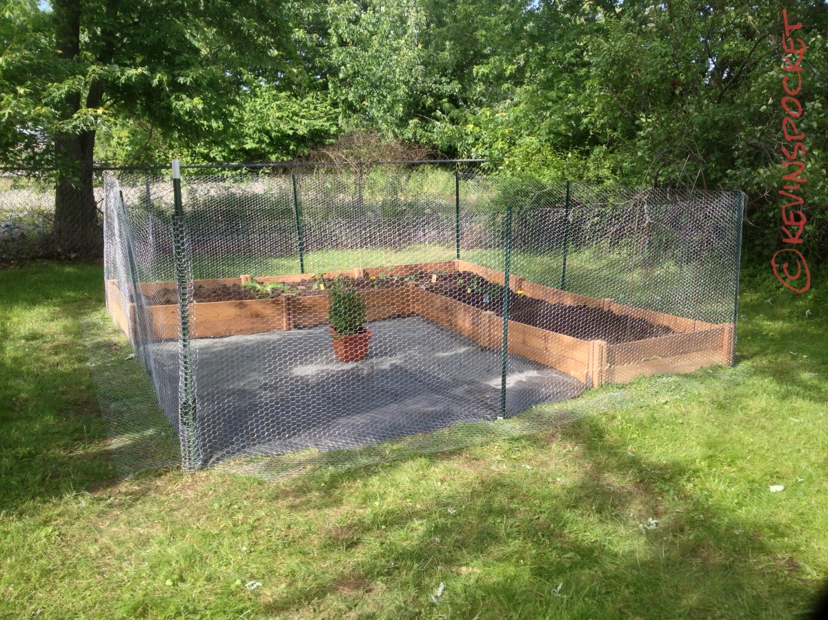 Best Vegetables Raised Garden