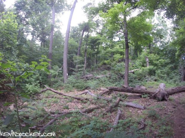 Cushetunk Mountain Preserve