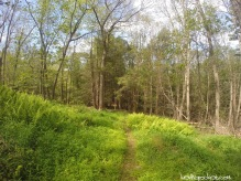 Delaware Water Gap - Millbrook