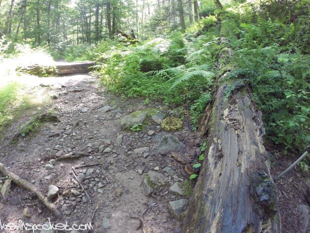 Dunnfield Creek - Delaware Water Gap