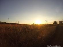 Griggstown Native Grassland Preserve Hike